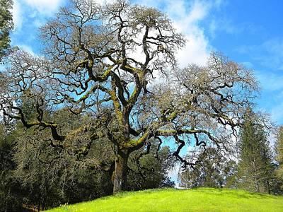 Gnarly Oak Original