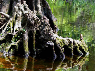 Photograph - Gnarly Roots by Judy Wanamaker