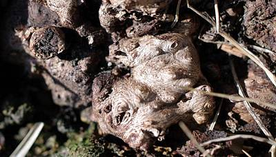 Photograph - Gnarly by Sheila Byers