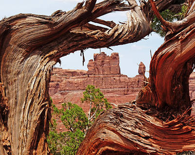 Art Print featuring the photograph Gnarly Tree by Alan Socolik