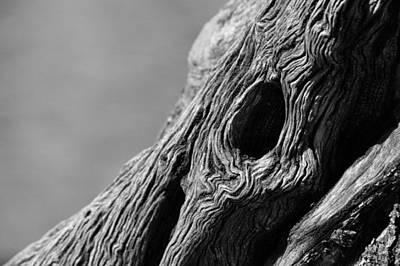 Tree Photograph - Gnarly Tree II by Michael McGowan