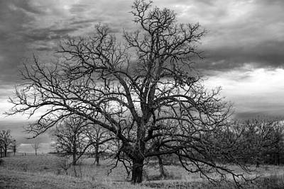 Art Print featuring the photograph Gnarly Tree by Sennie Pierson