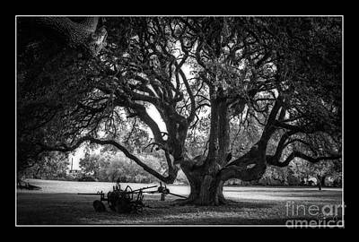 Photograph - Gnarly Tree With Plow by Imagery by Charly