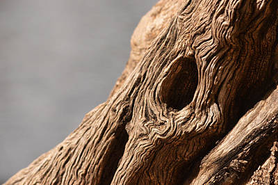 Photograph - Gnarly Wood by Michael McGowan