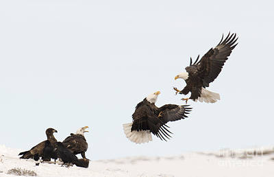 Photograph - Go Eagles by Deby Dixon