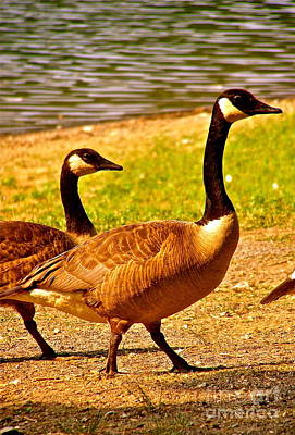 Photograph - Go Geese by LeLa Becker
