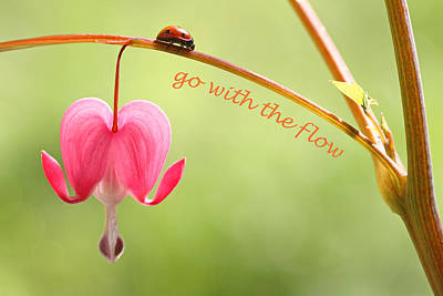 Photograph - Go With The Flow by Peggy Collins