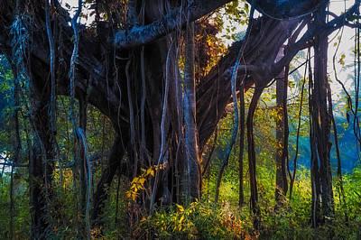 Tree Roots Photograph - Goan Banyan Tree. India by Jenny Rainbow