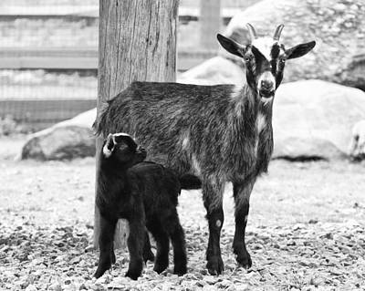 Beastie Boys - Goat Baby and Mother by Stephanie McDowell