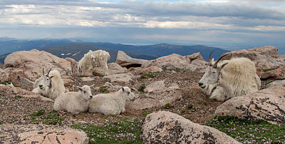 Photograph - Goat Ends by Kevin  Dietrich