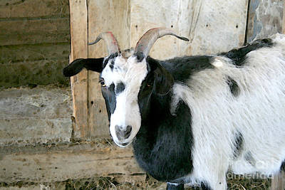 Digital Art - Goat In The Barn by E B Schmidt