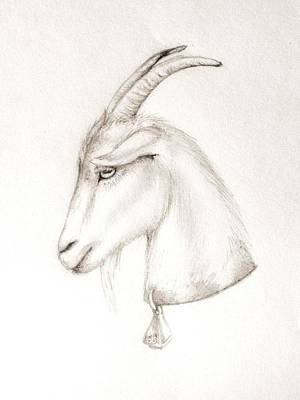 Drawing - Goat by Scarlett Royal