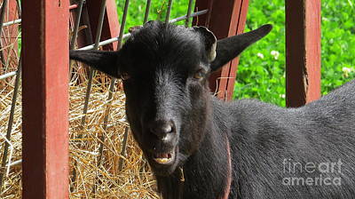 Pittsburgh According To Ron Magnes - Goat T by Randy Jackson