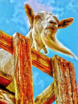 Art Print featuring the photograph Goat Up High by Annie Zeno