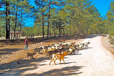 Goats Cross The Road With Tarahumara Boy As Goatherd-chihuahua Art Print