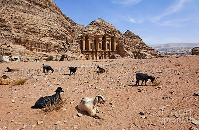Goats In Front Of The Monastery At Petra In Jordan Print by Robert Preston