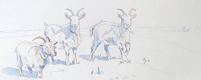 Animals Drawings - Goats by Mike Jory