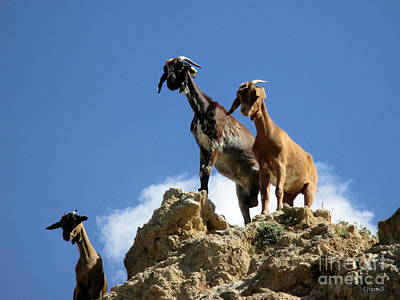 Photograph - Goats Near Olvera by Chani Demuijlder