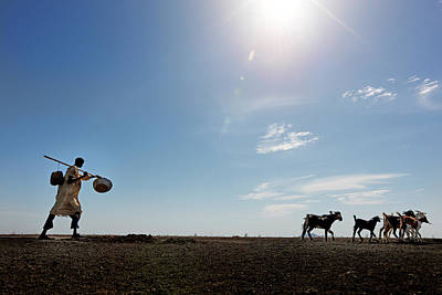 Blue Photograph - Goats With Herder Walking Across The by Johnny Haglund