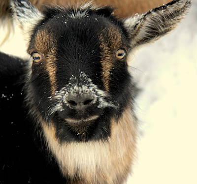 Goatstache Art Print by Kathy Bassett