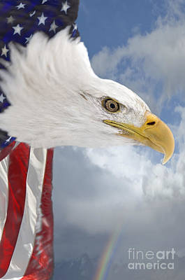 God Bless America Print by Wildlife Fine Art