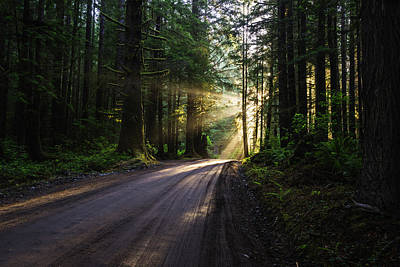 Photograph - God Rays At Redwood by Vishwanath Bhat