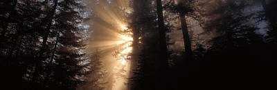 Redwood National Park Photograph - God Rays, Redwoods National Park, Ca by Panoramic Images