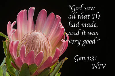 Photograph - God Saw It Was Good by Paul Miller