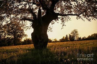 Photograph - Goddess Tree by Clare Bambers