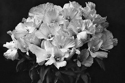 Godetia Wild Roses Art Print by Reginald A. Malby