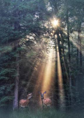 Fawn Digital Art - God's Creatures by Lori Deiter