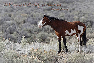 Forelock Photograph - God's Gift D1044 by Wes and Dotty Weber