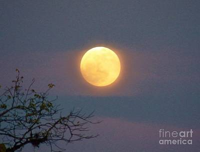 Photograph - Gods Night Light by Judy Via-Wolff