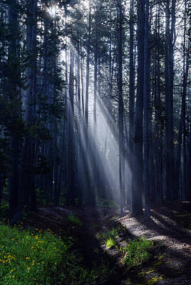 Photograph - God's Rays Through The Trees by Vishwanath Bhat