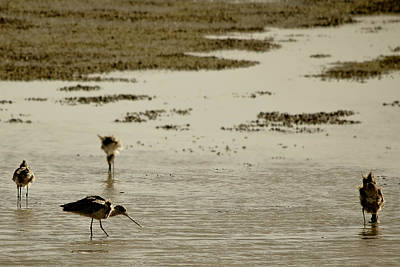 Photograph - Godwit Days by Jon Exley