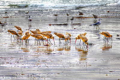 Godwits At San Elijo Beach Art Print
