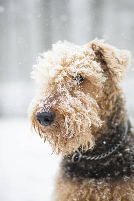 Dog's Portrait Under The Snow Art Print