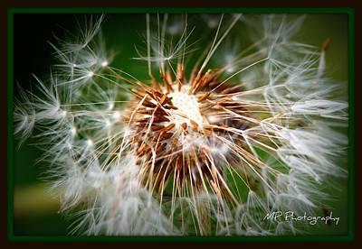 Flower Photograph - Going Bald  by Michaela Preston