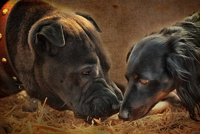 Dachshunds Doxie Digital Art - Going Nose To Nose by Terry Fleckney