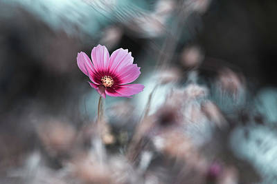 Single Flower Wall Art - Photograph - Going Out In Style by Fabien Bravin