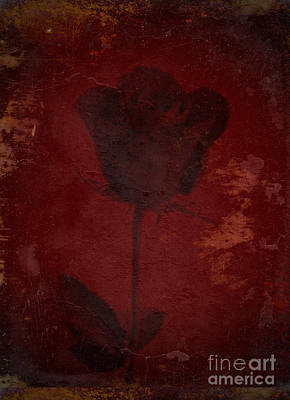Flower Express Photograph - Gold Accent On Red Rose Design by Adri Turner