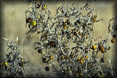Art Print featuring the photograph Gold And Gray - Silver Nightshade by Nadalyn Larsen
