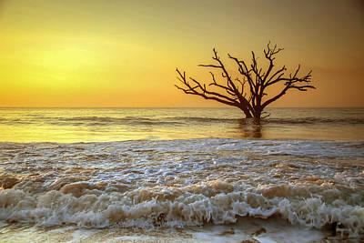 Edisto Island Photograph - Gold Coast by Serge Skiba