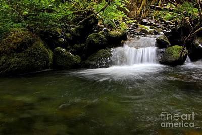 Gold Creek  Art Print by Tim Rice