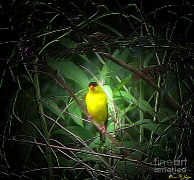 Photograph - Gold Finch by Donna Brown