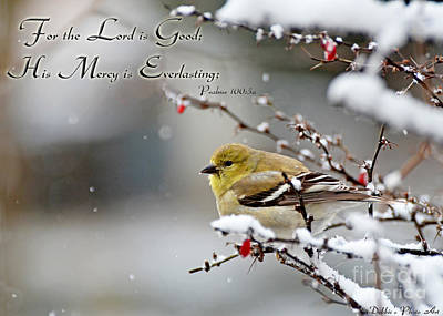 Photograph - Gold Finch On Snowberry Bush With Verse by Debbie Portwood
