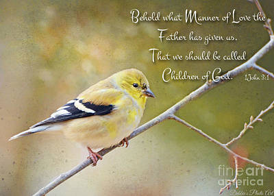 Photograph - Gold Finch On Twig With Verse by Debbie Portwood