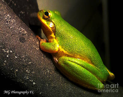 Photograph - Gold Flake Frog by Marty Gayler