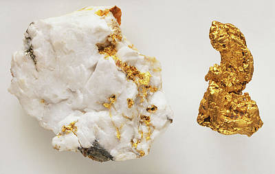Gold Mine Photograph - Gold In Quartz by Dorling Kindersley/uig