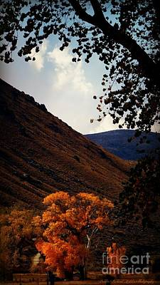 Photograph - Gold In The Valley  by Bobbee Rickard